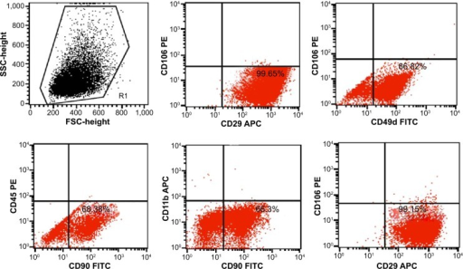 Flow cytometry identification of adipose-derived stem cell (ADSCs) using the surface antibody markers CD29 (99.65%), CD90 (68.38%) and CD49d (86.82%), CD45 (0.06%), CD11b (0.24%), and CD106 (0.84%).Abbreviations: APC, allophycocyanin; FITC, fluorescein isothiocyanate; FSC, forward scatter; PE, phycoerythrin; SSC, side scatter.
