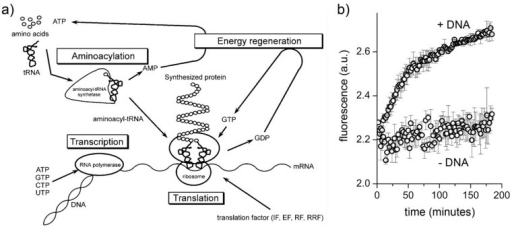 Protein synthesis inside conventional liposomes. (a) Components and functions of the PURE systems (reproduced from [27] with the permission of Elsevier); (b) fluorescence versus time profiles of eGFP producing vesicles (+DNA) and negative control (−DNA) (reproduced from [9] with the permission of Wiley).