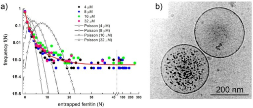 (a) Ferritin occupancy distribution as determined by analyzing about 7700 individual vesicles imaged by cryo-TEM. Experimental points shown as colored circles, theoretical expectations as empty circles connected by a line; (b) Two conventional POPC vesicles: one is super-filled with ferritin (encapsulating much more ferritin molecules than expected), the other does not contain any ferritin molecule (also against expectations). Images reproduced from [10] with the permission of Wiley.