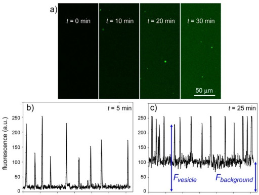 Experimental results for the CA + CFDA system. (a) Confocal micrographs showing green fluorescent vesicles that appear in the progress of reaction (t = 0, 10, 20, 30 min). The vesicles appear more fluorescent than the background although the same reaction is also occurring outside vesicles. (b,c) The vesicle fluorescence can be estimated by image analysis (by ImageJ software [45])—here shown as the pixel luminosity of samples taken at 5 and 25 min after mixing. Note that the fluorescence values of each vesicle greatly differ from each other (giving a fluorescence distribution, cf.Figure 8) and are well above the background. Note also that the background fluorescence increases with time, as expected.