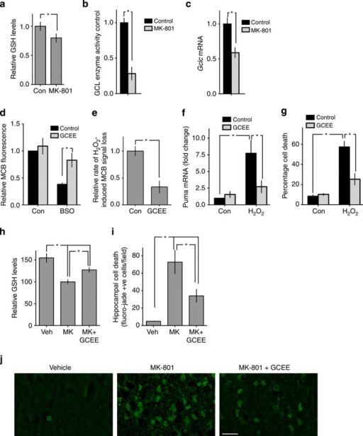 Deleterious effects of NMDAR blockade in vivo are due to Gclc transcriptional repression.(a) Blockade of NMDARs causes a reduction of cortical GSH content in vivo. Cortical GSH levels measured in P6 rat pups 24 h after the first injection. *P=0.0495, one-tailed t-test (n=4). (b,c) Blockade of NMDARs reduces GCL enzyme activity and Gclc expression in vivo. Rat pups treated as in Fig. 4a and cortical GCL activity (b) and Gclc expression (c) were measured at 12 h and expressed relative to the mean of the control group. P=0.0006 (b), 0.0042 (c) (n=4). (d) GCEE sustains GSH levels in the presence of GCL inhibitor. Neurons were treated with GCEE (1 mM) for 1 h, followed by 200 μM BSO for 24 h, followed by MCB assay. *P=0.0002 (n=9 (con), n=5 (BSO)). (e) GCEE attenuates GSH depletion by oxidative insult. Neurons were treated for 1 h with GCEE then rate of decline in GS-bimane fluorescence induced by 250 μM H2O2 measured. *P=0.0070 (n=4). (f,g) GCEE attenuates oxidative stress-induced Puma mRNA expression and cell death. Neurons were preincubated ±GCEE for 1 h, then treated with 100 μM H2O2 and either Puma levels. *P=0.0086, 0.047 (f) n=9 (con), n=5 (GCEE)) or cell death analysed.*P=0.0110, 0.0217 (n=4 (H2O2, n=3 (Con)). (h) GCEE rescues NMDAR blockade dependent forebrain GSH depletion in vivo. P6 Rat pups were injected twice at 0 and 8 h and cortical GSH levels measured at 24 h, normalized to protein content and expressed relative to MK-801 treated samples. *P=<0.0001, 0.0105, 0.0087, 1WA-Fph (n=8,9,9 for Veh, MK, MK+GCEE respectively). (i,j) GCEE rescues neurons from MK-801 induced cell death in vivo. P6 Rat pups were injected twice at 0 and 8 h and killed 24 h post first injection, followed by Fluoro-Jade staining-based analysis of neurodegeneration within the hippocampus. *P=<0.0001, 0.0105, 0.0087, 1WA-Fph (n=9, 11, 11 for Veh, MK and MK+GCEE, respectively). Scale bar, 30 μm.