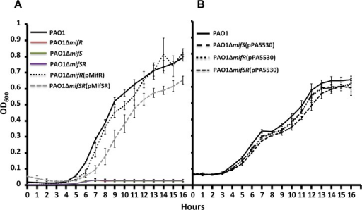 Rescue of α-KG-dependent growth phenotype of mifSR mutants.Growth curves of P. aeruginosa wild-type PAO1, mifSR single and double deletion mutants and its complimenting clones (A) and in the presence of pPA5530 (B) in M9 minimal media with α-KG (30 mM).