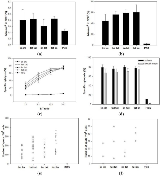 SFVeE6,7 tattoo injections induce strong T cell responses. Mice were tattooed or intramuscularly immunized with 5 × 106 i.u. of SFVeE6,7 and boosted 14 days later using the same or alternative delivery route. Ten days after the booster immunization animals were sacrificed. Freshly isolated (a) and 7-day in vitro restimulated spleen cells (b) were stained with MHC class I tetramers and anti-CD8 antibodies and analyzed by flow cytometry. The percentages of tetramer-positive cells within the CD8 T cells are shown. Activity of restimulated spleen and inguinal lymph node cells were analyzed in regular (c); only spleen cells) and micro CTL assay (d; both spleen and lymph node cells). The frequencies of IFNγ-producing cells, both in the spleens and inguinal lymph nodes, were determined using Elispot assay. Results are expressed as number of IFNγ-producing cells per 106 splenocytes (e) or per 106 lymph node cells (f). Each dot represents an individual mouse; a–d—data from a representative experiment out of four (three mice/group); e—pooled data from four experiments; f—data from one experiment. E:T ratio—effector:target ratio. * p < 0.05 as compared with the im group.