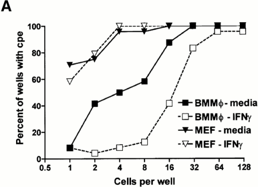 IFN-γ inhibits MCMV replication in both BMMϕ and MEFs by decreasing viral yield per cell rather than decreasing the number of infected cells. (A) BMMϕ or MEFs were treated with or without 100 U/ml IFN-γ for 48 h, infected at an MOI of 1 for 2 h on ice, and then incubated for 2 h at 37°C to allow internalization of the virus. Cells were washed, serially diluted, and the frequency of productively infected cells determined. Data shown is the percentage of wells with cytopathic effect (24 wells/dilution/experiment) from one of two experiments with similar results. (B–D) BMMϕ were treated with medium (B) or 100 U/ml IFN-γ (C), infected at an MOI of 1 for 1 h at 4°C, or mock infected. Cells were stained with an IE1-specific mAb (B and C) or an isotype-matched control mAb (D), a FITC-conjugated secondary Ab, and counterstained with bisbenzimide. Data shown are double exposures of bisbenzimide staining (converted from the blue to red plane) and FITC staining. IE1-positive cells can be visualized as light yellow nuclei. Shown is a representative one of four experiments. For this experiment shown, two independent, randomly selected regions of each of two slides for each condition were photographed and counted. 21% (252 of 1,206 cells counted) of media-treated BMMϕ (B) expressed nuclear IE1 protein, whereas 17% (136 of 792 cells counted) of IFN-γ–treated BMMϕ (C) expressed nuclear IE1 protein. Infected cells stained with the isotype-matched mAb, HI-gamma-1-109.3 specific for DNP, were uniformly red (shown are IFN-γ–treated infected BMMϕ (D). Mock-infected cells stained with either mAb specific for IE1 or control mAB were indistinguishable from D.
