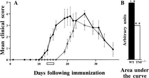 Natural history of EAE in WT and TNF−/− C57BL/6 mice.  (A) Mean clinical EAE scores (± SEM) of WT mice (•, n = 6) and  TNF−/− mice (○, n = 8) after immunization with MOG/CFA. The  horizontal bar at days 13–15 indicates a time point of closer examination,  referred to in Fig. 2 and in the text. (B) As a measure of the relative susceptibility of WT and TNF−/− mice to neurological deficits induced by  immunization with MOG, areas under the curves in A were determined.  Results are representative of four separate time course studies.