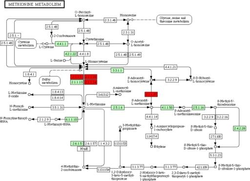 Methionine Metabolism In Nematodes Cytosine