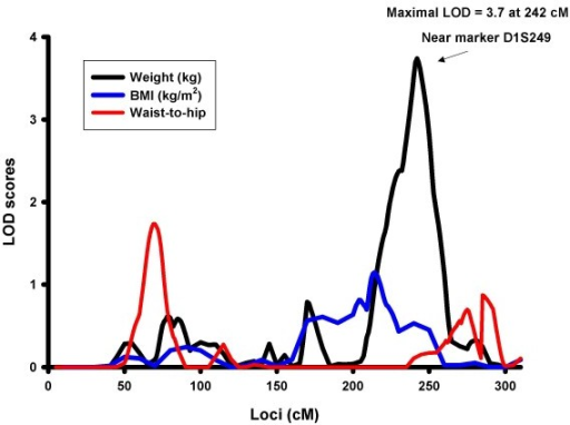 Multipoint LOD Scores on Chromosome 1 for Obesity Traits Accounting for Diabetes Interaction. Adjusted for age, age2, sex, age-by-sex interaction within centers.
