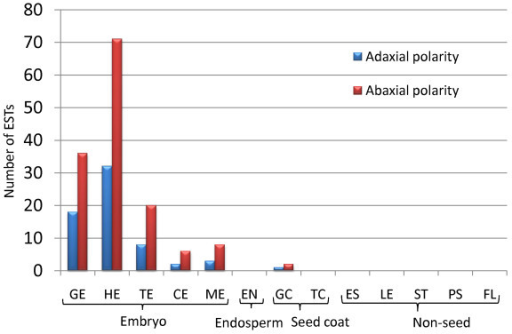 Putative flax unigenes representing organ polarity transcription factors. Organ polarity transcription factor ESTs are most abundant during cotyledon primordia differentiation of heart-stage embryos. Adaxial (HD-ZIPIII family and AS1) and abaxial (YABBY and KANADI families) gene expression establishes organ polarity. EST distribution of flax unigenes used to compile this graph is listed in Additional File 2.
