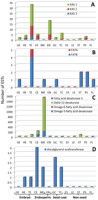 EST distribution of fatty acid biosynthetic genes during seed development and maturation across tissue libraries. (A) acyl chain elongation (Keto Acyl Synthases); (B) acyl chain termination (Fatty Acyl Thioesterases); (C) desaturation (Desaturases); (D) triacylglycerol (TAG) biosynthesis. EST distribution of flax unigenes used to compile these graphs is listed in Additional File 3.