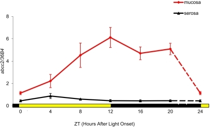 Circadian patterns of abcc2 mRNA expression in the ileum of male B6D2F1 mice.Mean (± SEM) in mucosa and in serosa as a function of Zeitgeber Time (ZT), with ZT0 as light onset. Statistically significant differences according to ZT were validated for mucosa with ANOVA (p = 0.02). A statistically significant 24 h rhythm was confirmed for mucosa with cosinor (p = 0.0011).