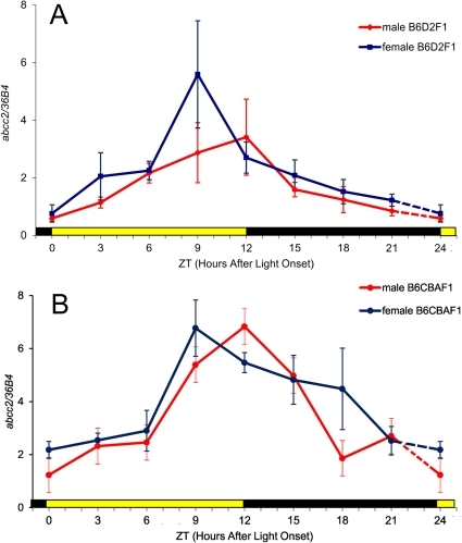 Circadian patterns of abcc2 mRNA expression in the ileum mucosa of mice, according to genetic background and sex.Mean (± SEM) as a function of Zeitgeber Time (ZT), with ZT0 as light onset. (A) male and female B6D2F1; (B) male and female B6CBAF1. Mean abcc2 expression increased six-fold from ZT0 (trough) to ZT12 (peak) for B6D2F1 males and ZT0 (trough) to ZT9 (peak) for B6D2F1 females (ANOVA, p = 0.04; Cosinor, p = 0.0023 for B6D2F1 males and ANOVA, p = 0.0008; Cosinor, p = 0.0023 for B6D2F1 females). Similar three- to four-fold circadian variations were found in male and female B6CBAF1, with highest values occurring from ZT9 to ZT15, and a trough at ZT0 (ANOVA, p = 0.004 in male; p = 0.003 in female). The rhythm was validated by cosinor for B6CBAF1 (p = 0.00026 and p = 0.00012 in male and female, respectively).