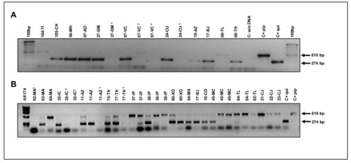 PCR amplification of the Ace.2 gene. Larvae collected at various cemeteries in Mexico City were reared to mosquito adults and then identified by PCR amplification of the Ace.2 gene [30]. The Cx. p. pipiens specific band of 610 bp and Cx. p. quinquefasciatus specific band of 274 bp and the expected bands of 610 and 274 bp for hybrids (panel B) are displayed in the agarose gels. *Cx. tarsalis identified by morphological analysis did not produce a PCR amplicon. †Culex spp. mosquitoes that were not identified as pertaining to the Cx. pipiens complex or hybrids by morphological analysis or by the Ace.2 gene assay.