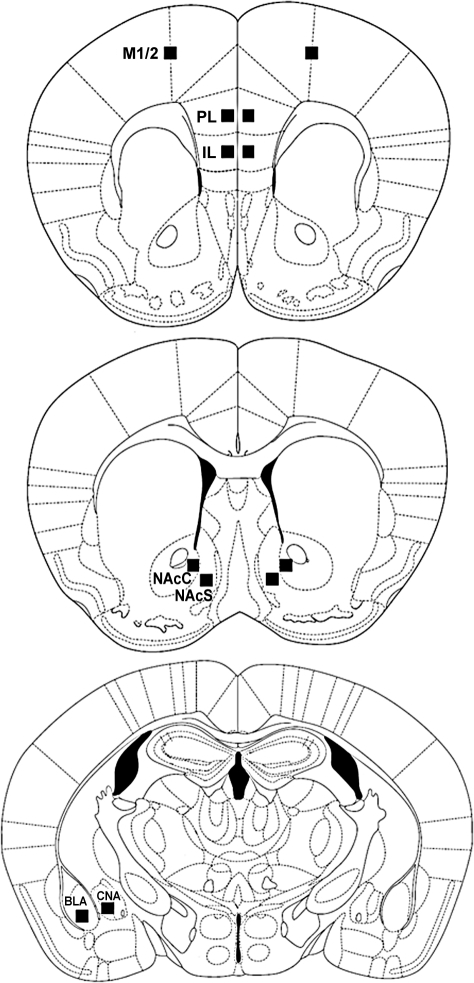 Schematic Diagrams Of Coronal Sections Of Mice Brain Il
