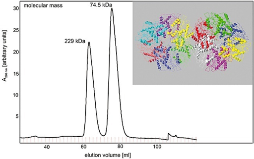 Size exclusion chromatography of purified recombinant AxeA, revealing active homodimeric and homohexameric forms of the enzyme. The elution volumes of the two symmetric peaks correspond to native molecular masses of 74.5 and 229.1 kDa respectively (for details see Experimental procedures). Insert: Oligomeric state of AxeA as derived from crystallographic data (PDB ID: 1vlq) which suggests 12 monomers arranged as two homohexamers in the asymmetric unit of the protein crystal.