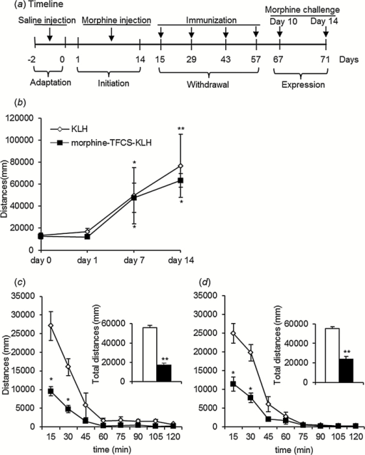 Effects of morphine-N-(ε-trifluoroacetylcaproyloxy) succinimide ester (TFCS)-keyhole limpet hemocyanin (KLH) immunization on morphine-induced locomotor sensitization. (a) Experimental timeline. (b) Initiation of morphine-induced locomotor sensitization. During 14 daily injections of morphine (10mg/kg, s.c.), locomotor activity significantly increased on days 7 and 14 of initiation, with no difference between groups. Locomotor activity on day 0 served as baseline. (c) Locomotor activity in morphine-TFCS-KLH-treated rats was significantly lower compared with KLH-treated rats after the morphine challenge on day 10. (d) Locomotor activity in morphine-TFCS-KLH–treated rats was significantly lower compared with KLH-treated rats after the morphine challenge on day 14. The data are expressed as mean ± SEM. *P < .05, compared with KLH group; **P < .01, compared with KLH group (n=10 per group).