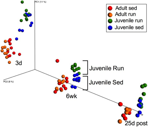Early life exercise and age altered beta diversity.Principle coordinates analysis (PCoA) using unweighted UniFrac distances with an explicit time axis depicts clustering of microbial communities due to age after three days (3d) and six weeks (6 wk) of exercise and 25 days following exercise cessation (25d post). After 6 wk, a clear clustering of juvenile run versus juvenile sed samples is noticeable.