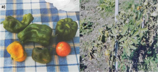 (a) Green and yellow bell peppers and a red tomato, from Bagno, L'Aquila, Italy, August 22, 2009; (b) tomatoes plants in a private garden near the railway station of L'Aquila, Italy, September 14, 2009.