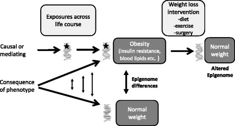 Epigenetic changes as a cause or consequence of obesity and related comorbidities. An epigenetic change is indicated as a star on the DNA