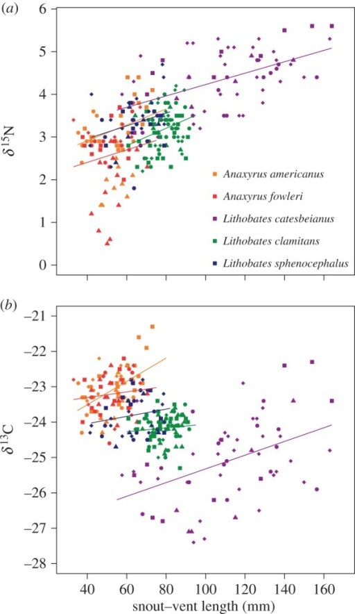 (a) δ15N values and (b) δ13C values and versus SVL for each species. Each species is represented by the colour in legend in panel (a). Lines for each species are represented by the same colour symbol and are the general linear models. Increasing δ15N values with SVL within species demonstrates how intraspecific variation can aid resource partitioning, as overlap in trophic niche is size-dependent. Smaller individuals within a species overlap in trophic niche with a different set of other species than larger individuals. This is particularly pronounced in L. clamitans and L. catesbeianus. Each region is represented by a differently shaped symbol: North (squares), North Central (circles), South (triangles), South Central (diamonds). Lines represent the slope of the regression without being nested for each site.