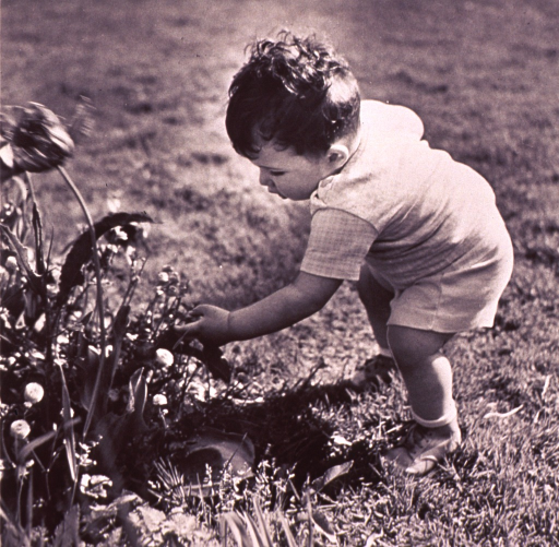 <p>Infant, standing, is looking at flowers.</p>