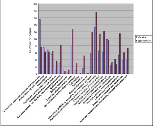 Abundance of the genes involved in different pathways in appressoria and mycelia. A total of 4,649 appressorial and 3,784 mycelial genes identified by microarray analysis were used in the KOG analysis.