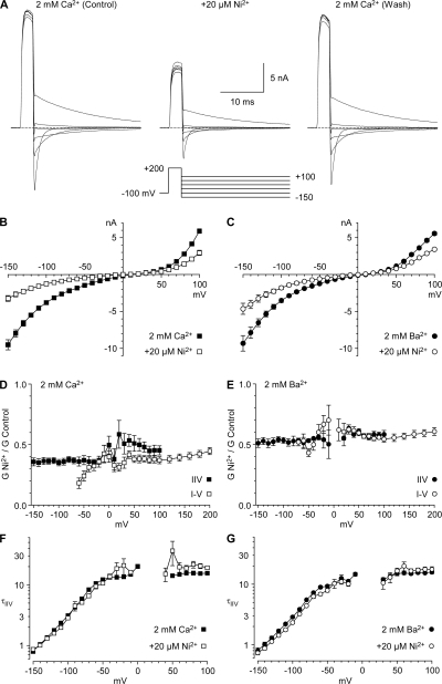 Inhibition of CaV3.2 by 20 μM Ni2+. (A) Sample currents with the IIV protocol. Cell d080508, 3-kHz Gaussian filter. (B and C) IIV relationships for inhibition by Ni2+ in 2 mM Ca2+ (n = 7) and 2 mM Ba2+ (n = 4). Prepulses to +60 mV were 2 ms or 3 ms in different cells. (D and E) Ni2+/control ratios, calculated from chord conductances, from IIV and I-V protocols (see Figs. S8 and S9). (F and G) Time constants from the IIV protocol.