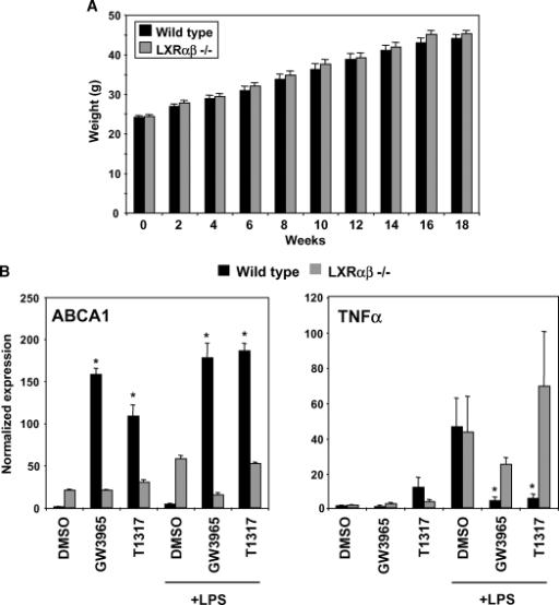Recipient mice showed equivalent weight gain and exhibited efficient reconstitution with wild-type or LXR- donor bone marrow (BM). A: Wild-type and LXRαβ−/− mice gained weight at similar rates on a 60% fat diet. B: Thioglycollate-elicted wild-type and LXRαβ−/− peritoneal macrophages were harvested from recipient mice to determine degree of reconstitution. Wild-type and LXRαβ−/− macrophages were pretreated with GW3965 or T1317 (1 μM) and then stimulated with LPS (10 ng/ml) for 6 h. The LXRαβ target gene, ABCA1, did not increase in expression as a result of ligand treatment in LXRαβ−/− cells. Furthermore, LXRαβ−/− cells failed to repress TNFα gene expression. Wild-type cells treated with LXR ligand were able to exert anti-inflammatory control. Error bars represent SEM.