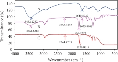 (A) Fourier transform IR spectra of chitosan; (B) chitosan-coated PBCA-NPs;  (C) PBCA-NPs.