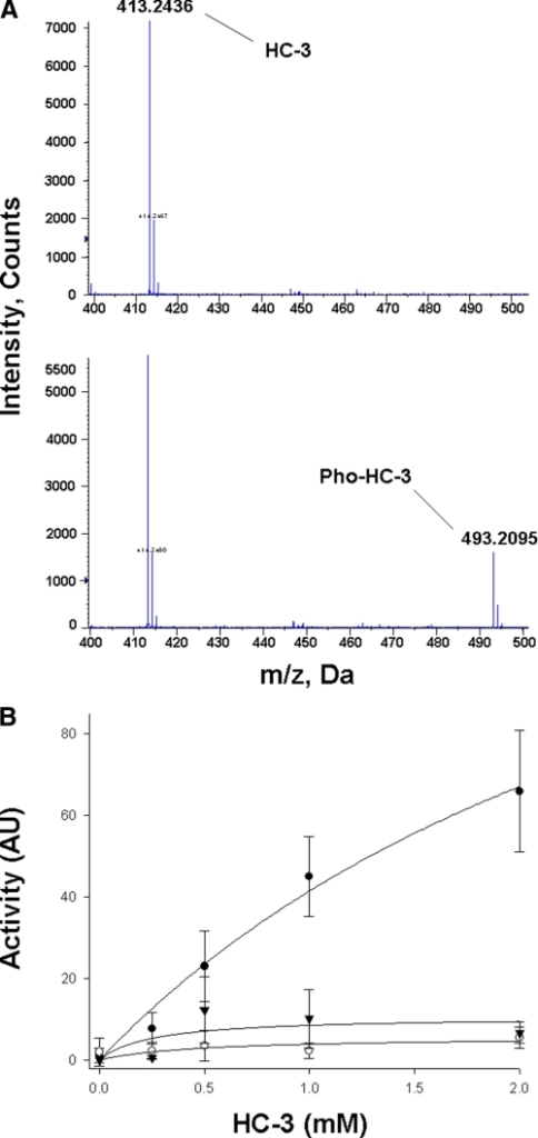 HC-3 phosphorylation by ChoK. A, mass spectra of the supernatant from a reaction mixture of ΔN-ChoKβ in the presence of ADP. The supernatant was incubated for 15 min and contains the major peak at m/z 413.2, corresponding to native HC-3 (top), whereas the spectrum from the same reaction mixture incubated for 5 h reveals the presence of another peak at m/z 493.2 corresponding to Pho-HC-3 (bottom). B, HC-3 phosphorylation activity by ChoK isoforms. The experiments were performed using full-length wild-type ChoKα1 (○), ChoKα2 (▾), and ChoKβ (·) in the presence of [γ-32P]ATP. Data shown represent the means of triplicate determinations, and error bars indicate the standard deviations.