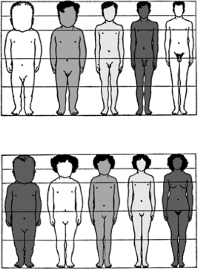 changes in body proportion during human growth after bi | open-i, Muscles