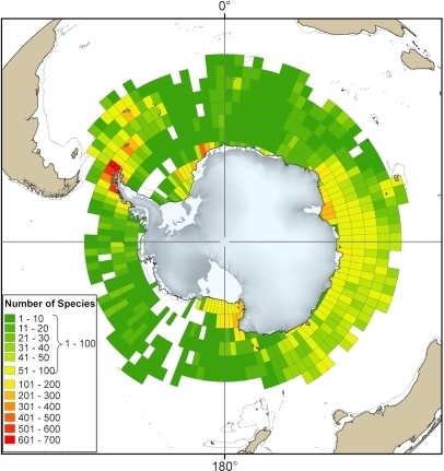 Counts of recorded species within the Southern Ocean.The total numbers of all marine species from distribution records in SCAR-MarBIN found within each 3° of latitude by 3° of longitude grid square.
