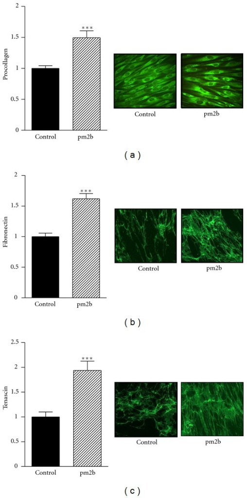 Extracellular matrix proteins in fibroblast culture. Procollagen (a), cellular fibronectin (b), and tenascin (c). Primary human fibroblasts were treated with pm2b (230 nM) and proteins were analyzed after 96 h by immunocytochemical staining (originally 400x). Data are representative images and expressed as mean ± SEM for triplicate measurements. ***P < 0.001 versus control.