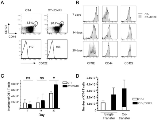 Attenuated TGF-β sensitivity alters homeostasis of OT-I CD8 T cells.(A) Analysis of intact OT-I and OT-I/DNRII mice. Spleen and lymph node cells from OT-I/DNRII mice exhibit an elevated frequency of CD44hiCD122hi CD8+ T cells compared to normal OT-I controls (upper panels, gated on CD8+Kb-OVA+). The percentage of CD44hiCD122hi is indicated in each dot plot. CD122 express within the CD44lo population is equivalent in OT-I and OT-I/DNRII (lower panels, gated on CD8+ Kb-OVA+CD44lo. (B) CFSE labeled CD44lo OT-I or OT-I/DNRII TCD8 cells were adoptively transferred into sublethally irradiated B6 recipients. Host animals were sacrificed at the indicated timepoints and donor cells analyzed. Expression of CFSE, CD44 and CD122 levels on donor OT-I or OT-I/DNRII cells recovered from the spleen at 7, 14, and 20 days after transfer. (C) Mean number of splenic OT-I and OT-I/DNRII cells recovered from the spleen of host animals (n = 3 per group). (D) The mean number of donor cells recovered from single or cotransfer of OT-I and OT-I/DNRII CD8 T cells in the lymph nodes 18 days after transfer into sublethally irradiated B6 (n = 3 per group). All data are representative of at least 3 independent experiments.