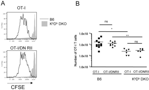 Homeostatic proliferation of OT-I/DNRII is MHC I dependent.CFSE labeled CD44lo OT-I Rag−/− or OT-I/DNRII Rag−/− CD8 T cells were transferred into irradiated KbDb−/− or wild-type hosts. One week later, lymph nodes and spleen from sacrificed mice were pooled and analyzed. (A) Representative CFSE dilution histograms of OT-I and OT-I/DNRII CD8 T cells in pooled lymph nodes and spleen one week after transfer into irradiated B6 and KbDb−/− hosts. (B) Recovery of OT-I and OT-I/DNRII CD8 T cells after one week in irradiated B6 or KbDb−/− hosts. Each symbol represents an individual mouse. Results are presented as the combination of three independent experiments.
