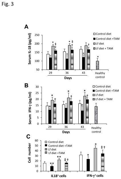 "Inhibition of reductions of IL-18 and IFN-γ in sera and intestinal cells. Blood and intestinal samples were collected from the mice in the prevention when they were killed on days 29, 36 and 43. A,B: The serum levels of IL-18 (A) and IFN-γ (B) were measured in the above mice and a group of 6 healthy control mice. C: The intestinal tissues were sectioned, immunostained with Abs against mouse IL-18 and IFN-γ, respectively, and examined by microscopy. IL-18+ and IFN-γ+ cells were counted in 10 fields. Results are expressed as the mean value ± SD. ""*"" P < 0.05 and ""**"" P < 0.001 versus the group fed the control diet, ""†"" P < 0.05 versus the group fed the control diet and treated with tamoxifen, and ""‡"" P < 0.05 versus the group fed the Fe-Lf diet."