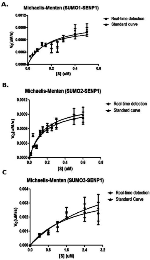 Michaelis-Menten plots of PreSUMO digestions by SENP1. (A). Michaelis-Menten plots of pre-SUMO1 digestion by SENP1 by either a real-time or standard curve method. (B). Michaelis-Menten plots of pre-SUMO1 digestion by SENP1 by either a real-time or standard curve method. (C). Michaelis-Menten plots of pre-SUMO1 digestion by SENP1 by either a real-time or standard curve method.