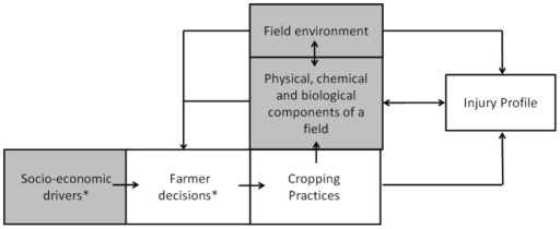 Schematic representation of an agroecosystem and its drivers.In green: components defining the Production Situation (except for the crop). The injury profile is the output variable of IPSIM, whereas its input variables are included within the three following components: cropping practices, field environment, and physical, chemical and biological (crop, pests, beneficials and harmless living organisms) components of the field. *Not taken into account in IPSIM.