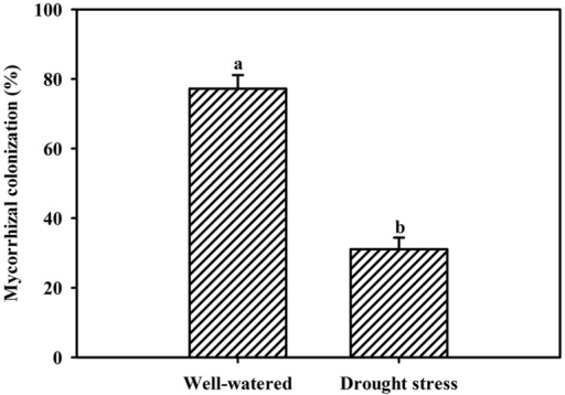 Root AM colonization of trifoliate orange seedlings by Funneliformis mosseae under well-watered (WW) and drought stress (DS) conditions. Data (means ± SD, n = 4) followed by different letters above the bars among treatments indicate significant differences at the 5% level.