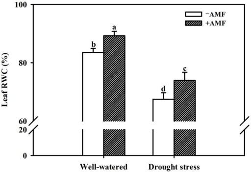 Effect of an AM fungus (F. mosseae) on leaf relative water content (RWC) of trifoliate orange seedlings under under WW and DS conditions. Data (means ± SD, n = 4) followed by different letters above the bars among treatments indicate significant differences at the 5% level.