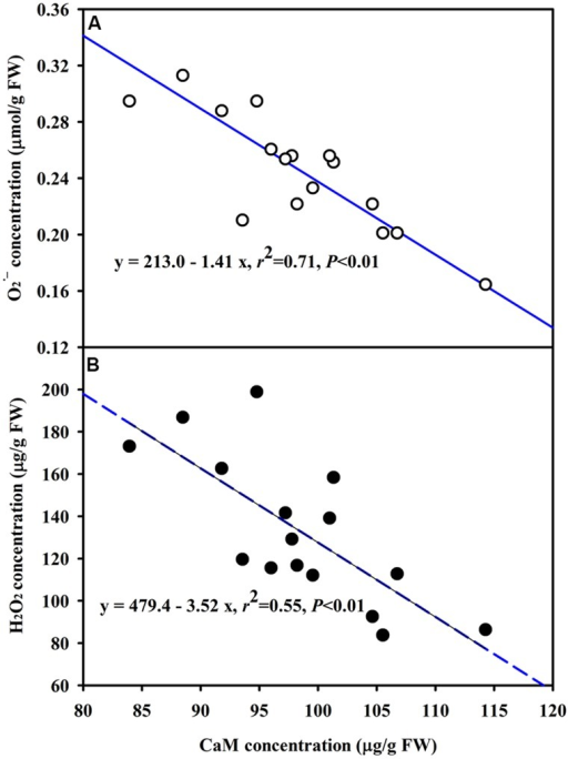 Line regression between CaM concentration and (A) or H2O2(B) concentration in leaves of trifoliate orange inoculated with an AM fungus (F. mosseae) under WW and DS conditions (n = 16).