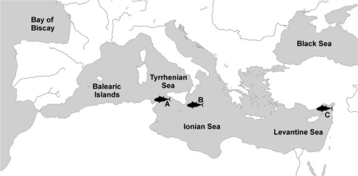 Map of the Mediterranean Sea and surrounding area with three larvae sampling sites: A) Strait of Sicily, B) Ionian Sea and C) Levantine Sea.