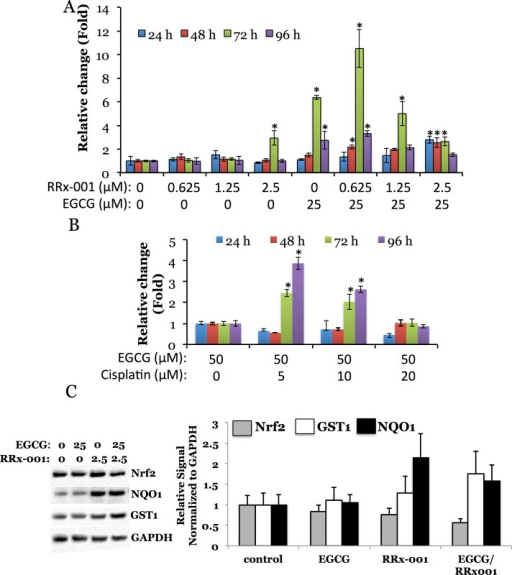 Time dependent activation of Nrf2-100-FLuc2 fusions in response to varying anticancer drug (A, RRx-001 and B, cisplatin) concentration in the presence of antioxidant (EGCG) in MDA-MB231 cells, and Nrf2 target genes (GST and NQO1) expression in MDA-MB231-Nrf2-100-FLuc2 cells in response to anticancer drug (RRx-001) in the presence of antioxidant (EGCG).Asterisk (*) denotes statistical significance (p<0.05) of a signal compared to that from the untreated cells (A) and from cells treated with 50 μM EGCG alone (B). C, Immunoblot of cell lysates treated with drug and/or antioxidant for 24 hours (Nrf2, GST and NQO1 expression was normalized to GAPDH expression). Error bars represent standard deviations of triplicate experiments.