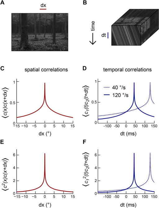 Motion transforms spatial correlations into temporal correlations.(A) An example natural image (van Hateren and van der Schaaf, 1998). (B) When a natural image (top face) moves to the right, streaks in space-time (front face) indicate the direction and speed of the motion. Alternatively, motion influences the temporal correlation structure of visual signals (side face). (C) Second-order correlation function between pairs of spatially separated contrast signals (across the natural image ensemble [van Hateren and van der Schaaf, 1998]). (D) For constant velocity motion, the temporal correlation function between a pair of spatially separated points is shifted and stretched relative to the spatial correlation function. We separated the two points by Drosophila's photoreceptor spacing (5.1°). (E) Example third-order spatial correlation function involving two points in space. (F) As with pairwise correlations, higher-order temporal correlations between spatially separated visual signals are shifted and stretched (relative to higher-order spatial correlation functions) in a manner that indicates the speed and direction of motion.DOI:http://dx.doi.org/10.7554/eLife.09123.015