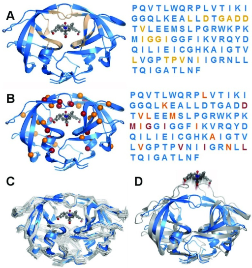 The HIV-1 protease as a generic model system for computational biophysics14–16.HIV-1 protease has become a model system because of its disease relevance, the availability of mutational and drug binding data, and for its tractable size and molecular stability. The protein's function is to cleave HIV peptides into the functional proteins of the infectious HIV virion. This example illustrates generalized concepts of the applicability of protein modeling methods in clinical investigationsA)Ligand binding residues are spatially separated. The functional protein dimer is shown with a pharmacologic inhibitor bound to the active site. Residues that are within 3.5Å of the inhibitor are highlighted in tan. The primary sequence is colored identically to the three-dimensional structure to indicate relative positioning of residues. It is apparent that the ligand binding portion of the protease consists of residues that are non-adjacent within the primary sequence, which illustrates an advantage of modelling over linear sequence analysis.B)Drug resistance mutations tend to occur in residues within the active site. Many mutations have been characterized that are associated with resistance to inhibitor drugs. While the sites of these mutations are also disjoint in sequence, nearly all of them fall into the same set of drug binding residues, indicating how modeling can enable prediction of a mutation's effect.C)Structural effects of mutations beyond the active site. Drug-resistance mutations in non-ligand-binding residues have been shown, using computational experiments, to impact the flexibility of the protein and therefore alter drug binding. Computational modeling has characterized the flexibility of the protein in multiple mutated states, illustrating the potential to predict the functional effect of mutations beyond an active site.D)Dynamics of ligand-free protein. Computational studies have the advantage of being able to simulate conditions that are difficult to assay experimentally, such as the dynamics of ligand-free forms in atomic detail.