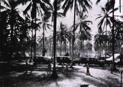 <p>Amidst tall palm trees are tents and army ambulances.  Military personnel can be seen standing or walking.</p>