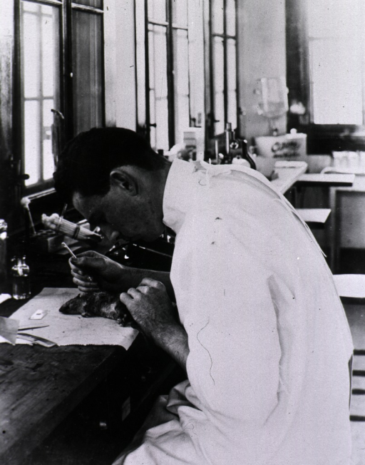 <p>A laboratory technician (three-quarter length portrait seated, facing left, looking down) inspects a dead rat, probably for the presence of plague; a comb used to remove fleas and the tag indicating where the rat was caught lay on the table.</p>