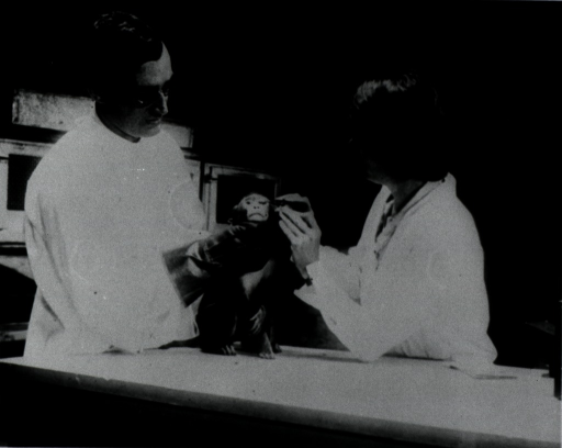 <p>Dr. Bengston and her assistant, Mr. Underwood, examine a monkey with trachoma.</p>
