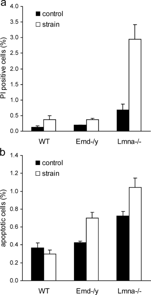 Emerin and A-type lamin-deficient cells are more sensitive to mechanical strain. (a) A-type lamin-deficient cells have a significantly increased number of propidium iodide–positive cells after 24 h of cyclic, 10% biaxial strain application. Emerin-deficient cells are not significantly different from wild-type cells. (Percentage of propidium iodide–positive cells at rest vs. after 24 h strain application = 0.13 ± 0.03% vs. 0.38 ± 0.12%, 0.2 ± 0.00% vs. 0.37 ± 0.04%, and 0.68 ± 0.18% vs. 2.94 ± 0.47% for wild-type, emerin-deficient, and A-type lamin-deficient cells respectively, P < 0.01 for wild-type vs. A-type lamin-deficient strained cells; P < 0.05 for wild-type vs. A-type lamin-deficient controls). (b) Emerin and A-type lamin-deficient cells have increased fractions of apoptotic cells after 24 h of cyclic, 10% biaxial strain application (percentage of apoptotic cells at rest vs. after 24 h of strain application = 0.37 ± 0.05% vs. 0.30 ± 0.04% for wild-type, 0.43 ± 0.02% vs. 0.70 ± 0.06% for emerin-deficient, and 0.72 ± 0.05% vs. 1.04 ± 0.11% for A-type lamin-deficient cells; P < 0.001 for strained emerin and A-type lamin-deficient vs. wild-type cells).