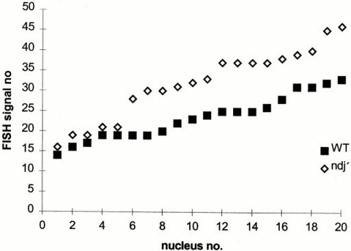 Analysis of telomere FISH signal numbers in 20 randomly selected, mildly spread nuclei of diploid SK1 wild-type and ndj1Δ meiocytes. Nuclei were obtained 200 and 300 min after induction of meiosis in the wild type and ndj1Δ, respectively, to allow for a compensation of the delay in mutant prophase I. Ranking according to increasing numbers of telomere FISH signals/nucleoid reveals that ndj1Δ meiocytes display significantly larger telomere signal numbers/nucleus.