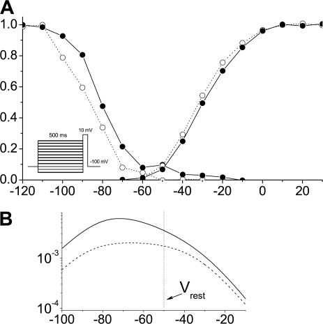 Steady-state activation and inactivation. (A) Representative steady-state activation and inactivation curves. Individual curves were fit with the Boltzmann function, and midpoints were averaged per patch and then overall averages were calculated, yielding no significant differences between activation thresholds (−33.8 ± 1.5 mV for control and −29.6 ± 2 mV for mdx5cvpatches). However, a shift of ∼10 mV toward more positive potentials for inactivation thresholds was observed in mdx5cv (−89.4 mV ± 2 mV for control and −79.5 mV ± 2.5 mV for the mdx5cv fibers, P = 0.01). The stimulation protocol used to produce currents for the inactivation curves is shown on the inset. (B) Window currents calculated from the determined average activation/inactivation thresholds and slopes at midpoint. Vertical line at −50 mV represents measured resting membrane potential, emphasizing an ∼2× increase in opening probability of Nav1.4 channels at rest in mdx fibers.